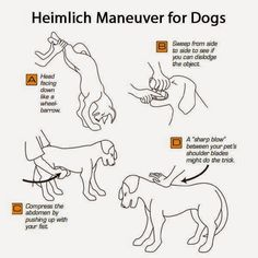Hi there friends…you keep asking for more Hack posts and believe me…you will be getting more very soon…but we thought maybe you would like a few Dog Hacks…some helpful little tips and then some very informative infographics for your furry friends! Sure hope you enjoy and we hope we get a 4 paws up from …