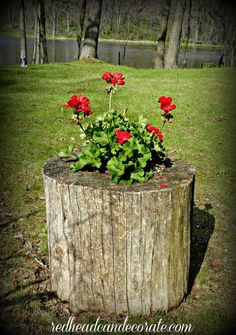 Great way to put that old stump to use! It makes for a beautiful flower planter.  See details here!