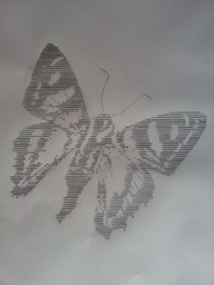 Moth,   Pencil on paper