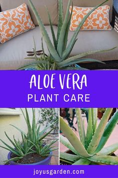 Succulent Gardening, Planting Succulents, Container Gardening, Planting Flowers, Caring For Succulents Indoor, Flowering Succulents, Succulent Ideas, Succulent Containers, Growing Succulents