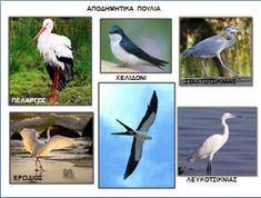 Τα αποδημητικά πουλιά Preschool Activities, Kids And Parenting, Kindergarten, Crafts For Kids, Birds, Animals, Autumn, March, Language