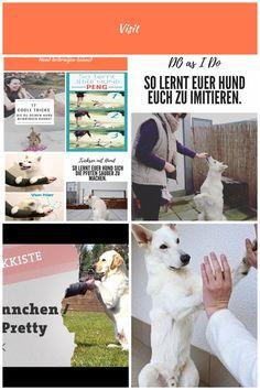 #Hundetricks #Hund Hunde Tricks Training Tipps Ideen Hundetraining Auslastung Hunde Tricks 17 coole Hundetricks, die Du Deinem Hund beibringen kannst Hunde Tricks Trick 17, Dogs, Animals, Wedding Jewelry And Accessories, Pooch Workout, Studying, Tips, Ideas, Animales