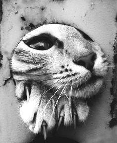 cat - crescentmoon animalia Photo: poor Molli | photographer: Айк Шалунц ~ http://laussibiencachee.blogspot.com/2011_06_01_archive.html