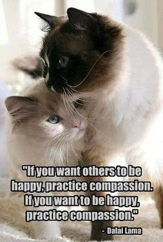 Even When It's Difficult, practice compassion.