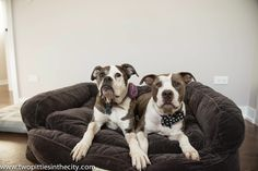DoggyStyle: The Pups' New Bed Arrives: The Orvis Deep Dish Lounger