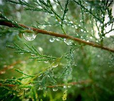 macro life · morning dew