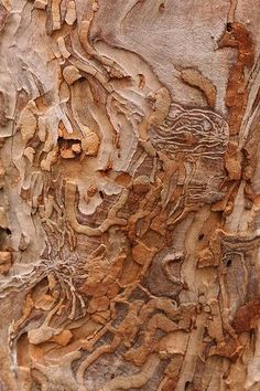 Art In Nature   Eucalyptus Bark   Natural Texture, Colour And Surface  Pattern Inspiration For Design