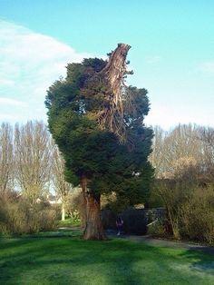 Ters ağaç