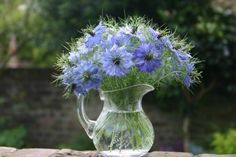 A vase of , love the common name. . .Love in a mist. . .very architectural bloom, the center somewhat resembles a thistle