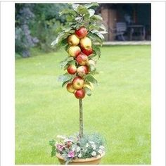 Clever!  Free Shiping Bonsai Apple Tree Seeds (50 Items per bag) DIY House Backyard our balcony indoor crops