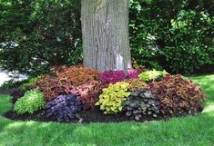 The basic differences between backyard and front yard landscaping are in the intended purpose of the design. Front yard landscaping will first consider how to provide necessary access into the home…MoreMore #LandscapingIdeas