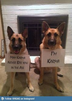 Funny GSD picture - German Shepherd Dog Forums