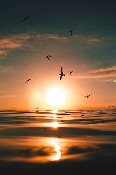 "thelavishsociety: "" Birds, Sun and Water by Ryan Pernofski | LVSH """