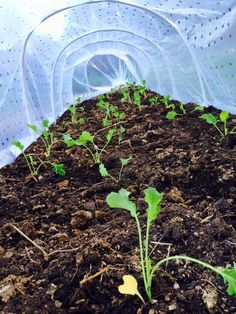 Inspirere deg til lagspill med naturen Organic Gardening, Plants, Plant, Organic Farming, Planets