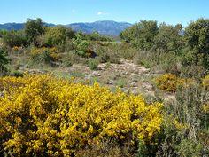 Casserres_paisatge mediterrani en esplendor primaveral