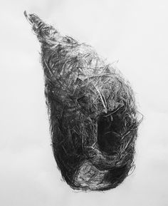 Bird Nest No.10, Charcoal on paper, 100 x 70 cm. Charcoal drawing by Liu Ling from Art Is http://artis.sg - #realism #nature