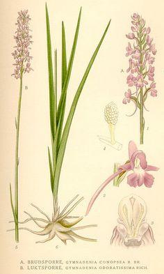 Love botanical prints