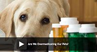 Are We Overmedicating Our Pets?