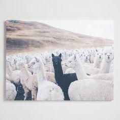 Alpacas by Jonathan Zoeteman