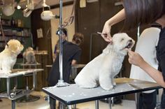 Dog grooming salons are among the most popular pet service businesses.
