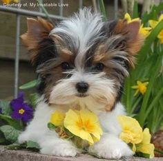 it must have took a lot of work to get that dog to pose like that!  Check out more cute puppies at our Facebook page! www.Facebook.com/…