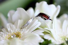 Hawkes Bay Wedding, Scotland vs New Zealand, Mission Estate Winery. Scotland, Amy, Wedding Photography, Wedding Shot, Wedding Photos, Wedding Pictures, Bridal Photography, Wedding Poses