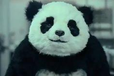 J'aime les pandas <3 (quand ils ont atteint leur majorité bien sûr n'allez pas me prendre pour un pedobear <=3 )