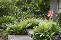 These wooden steps, weathered to a silver-gray, rise through the bright-green Brazilian tree fern (Blechnum 'Silver Lady') and the red and white flower spikes of the Heliconia angustifolia 'Red Christmas'.