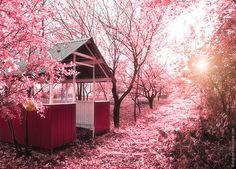 a pink world
