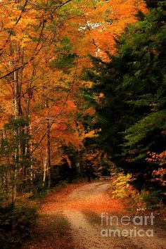 Autumn Trail Marcia Lee Jones