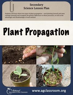 Secondary science lesson plan comparing sexual and asexual plant propagation. Students plant seeds and take cuttings to learn the benefits of each. Ag Science, Science Lesson Plans, Plant Science, Science Lessons, Plant Lessons, Corn Plant, Plant Propagation, Horticulture, Science