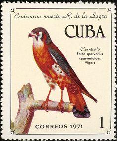 American Kestrel sellos - principalmente imágenes - formato de la galería