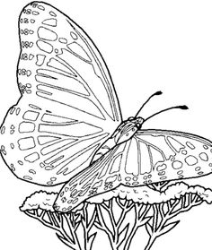 Printable butterfly Coloring Pages . 24 Printable butterfly Coloring Pages . butterfly Coloring Pages Bestofcoloring Cool Coloring Pages, Flower Coloring Pages, Animal Coloring Pages, Printable Coloring Pages, Coloring Pages For Kids, Coloring Sheets, Coloring Books, Coloring Pages To Print, Cartoon Butterfly