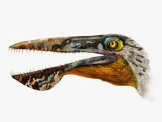 Ikrandraco avatar; (Early Cretaceous, 120 Ma); Pterodactyloid; Described by Wang et al., 2014 ::: Species New to Science: [Paleontology • 2014]