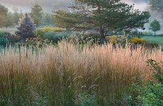 The upright feather reed grass 'Karl Foerster' acts as a border, perfectly framing our view of the winter landscape.