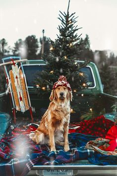 Dogs And Puppies Golden Retriever Doggies Ideas Cute Puppies, Cute Dogs, Funny Dogs, Christmas Mood, Funny Christmas, Christmas Christmas, Christmas Animals, Christmas Puppy, Country Christmas Trees
