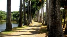 Jardin de la rhumerie Clément. François. Martinique.