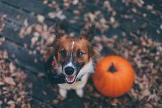 dog & pumpkin