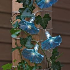 Morning Glory Lights - very pretty solar lights; the wire is the silver in clear tubing but can be painted, the leaves are not part of the set.