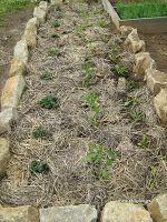 Φτιάχνω παρτέρια για καλλιέργεια λαχανικών.