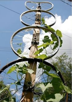 DIY Garden Trellis Projects Lots of Ideas Tutorials! Including this idea to use old bicycle wheels! Diy Garden, Garden Crafts, Dream Garden, Garden Projects, Diy Crafts, Garden Pallet, Herbs Garden, Garden Seeds, Garden Boxes