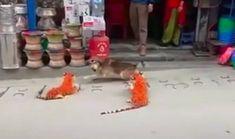 Dog Runs, Sleeping Dogs, Viral Videos, Pranks, Hilarious, Culture, Dog Park, Laughing So Hard, Funny