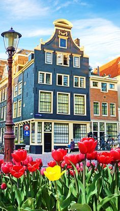 I remember my trip to Amsterdam as clear as the sky in the Caribbean on a sunny day. I have always wanted to visit. Its architecture, those beautiful Dutch houses, its windmills, dikes and the many canals made the place very appealing.