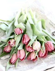 #tulips #flowers #pink