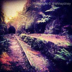 BUSH TRAIN ABANDONED | Photo © @giacattiva #abandoned #train #nature #lost #secret #urbex #sydney #nsw #history #victorian #exploring