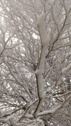 Hoarfrost covering a tree in my yard. Photo taken in the West Plains area of Spokane County Washington on January 17, 2014.