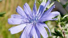 Защо наричат синята жлъчка слънчева булка? http://www.zdravnitza.com/a/nav/news/s/s/news_id/6772