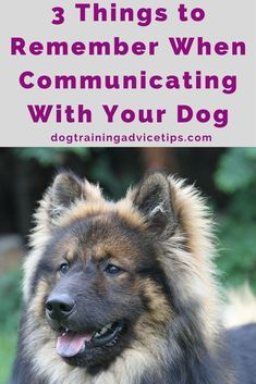 3 Things to Remember When Communicating With Your Dog | Dog Obedience Training | Dog Training Commands | Dog Training Ideas | http://www.dogtrainingadvicetips.com/3-things-remember-communicating-dog