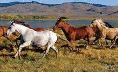 Parque Nacional Yendegaia. XII Región de Magallanes y Antártica Chilena