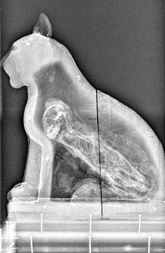 La momia de un gato vista a través de una radiografía.
